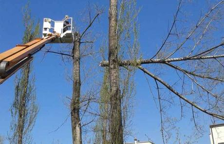 wycinka-drzew-cementownia-krk-zdj3