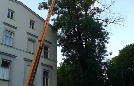 wycinka-wysokiego-drzewa