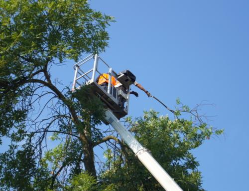 Wycinka drzew i krzewów – nowe przepisy