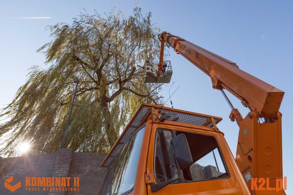 pielegnacja-drzew-cracovia