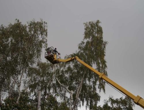 Oferujemy pomoc w związku z silnymi podmuchami wiatru
